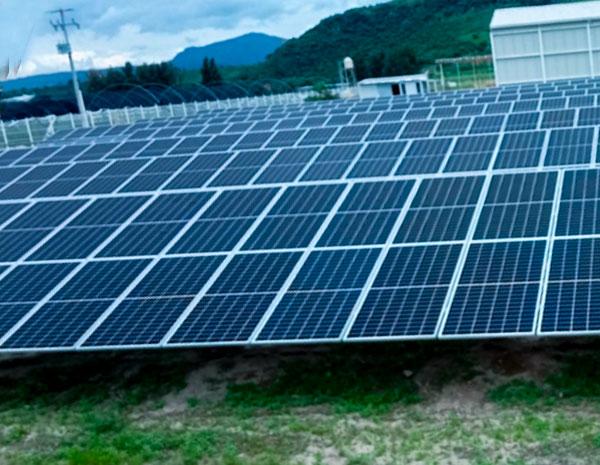 granja solar avipec caso de éxito